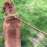 Ultimate gold dog leash | Big Dog Chains