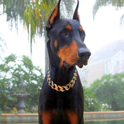 DOBERMAN DOG WEARING THE TRI COLLAR | BIG DOG CHAINS