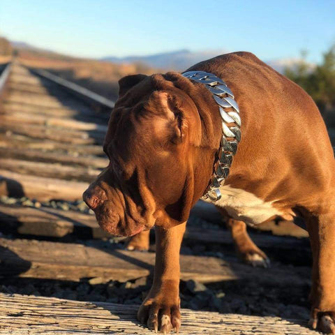 Hulk from ddk wearing the Goliath from Big Dog Chains