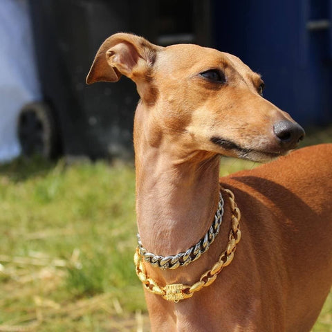 SMALL GOLD DOG COLLAR | LIL' DOG CHAINS