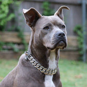 American Pit Bull Terrier dog collar chains | BIG DOG CHAINS