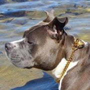 MIAMI CHOKER Luxury Cuban Link Choker Dog Collar for Strong Dogs High Quality Real Cuban Link Choker Check Chain with a Gold Finish - BIG DOG CHAINS