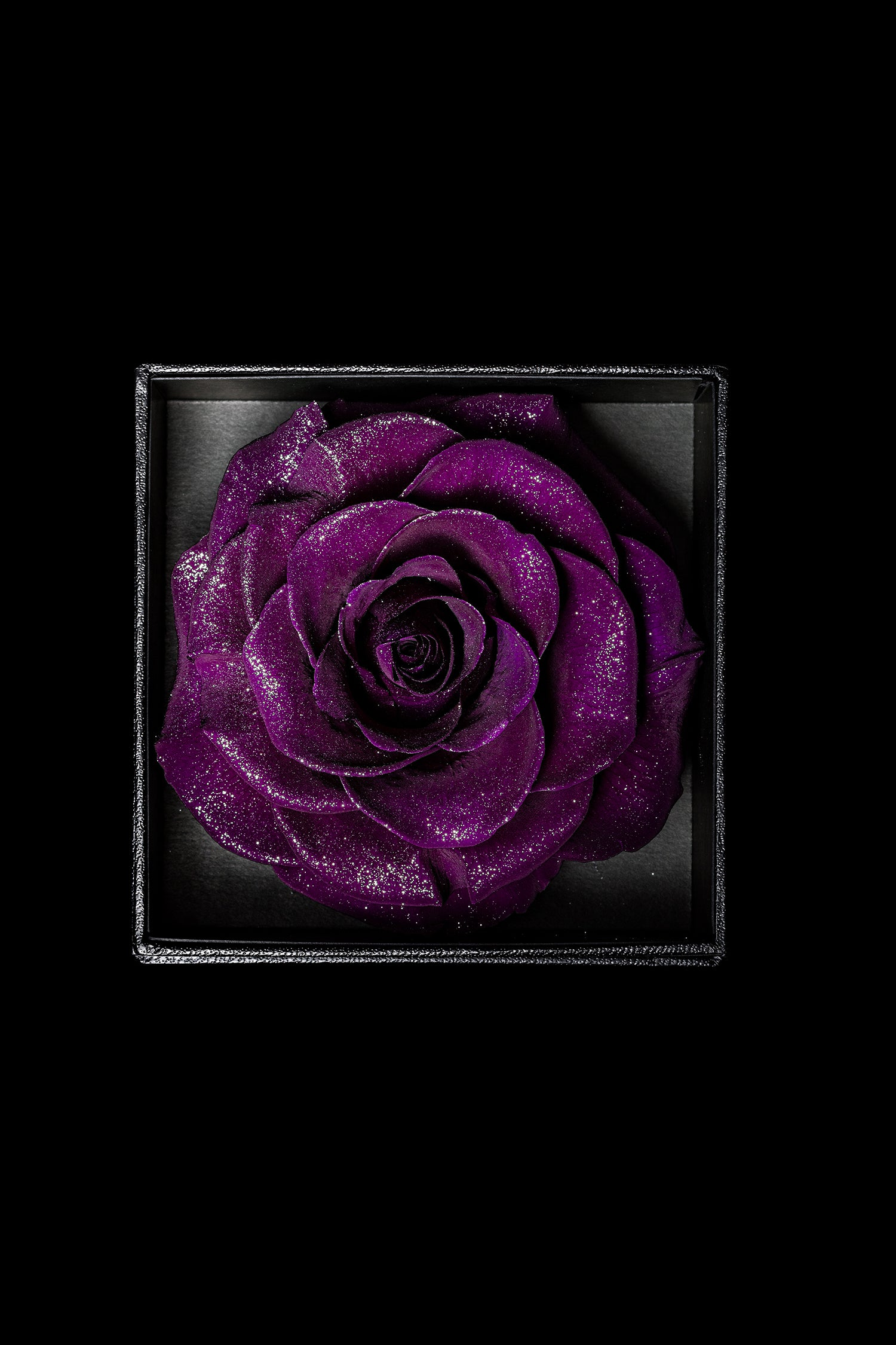 Royce - Dark Purple