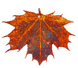 Real Leaf PENDANT Sugar Maple in Copper Genuine Leaf - Zhannel  - 1