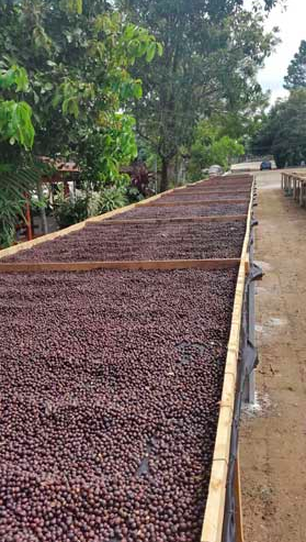 El Salvador Finca El Carmen Natural Process