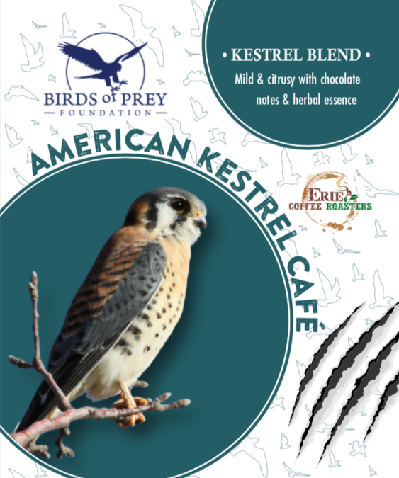 Birds of Prey Foundation: American Kestrel Blend