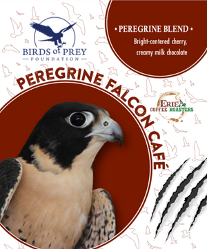 Birds of Prey Foundation: Peregrine Falcon Blend