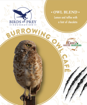 Birds of Prey Foundation: Burrowing Owl Blend