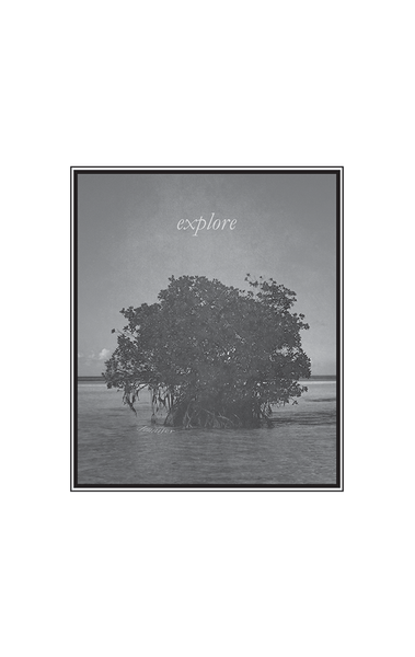 Closer look at our Explore print. Coastal view of a tree growing out of the water.
