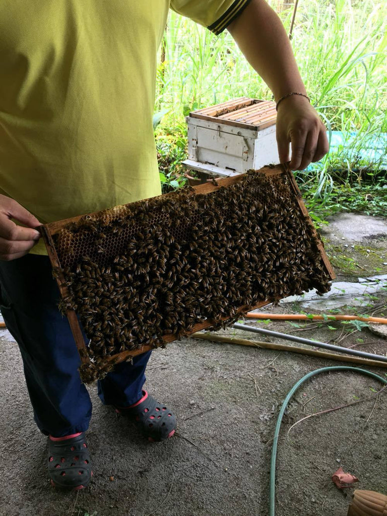 In Search of Beeswax