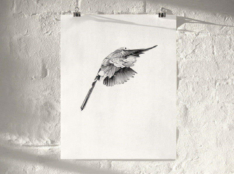 Bird 14 ( Giclee Print ) screen prints and original art by London artist Von — www.shopvon.com