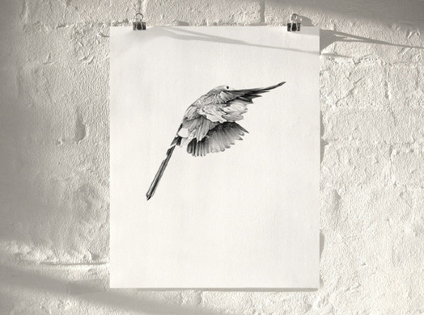 Bird 14 ( Giclee Print ) by London artist Von — www.shopvon.com