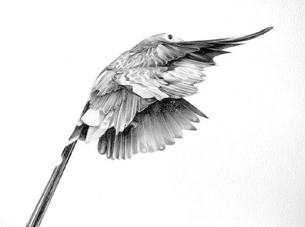 Bird 14   ( Giclee Print ) by London based artist Von  — ShopVon |  HelloVon - 2