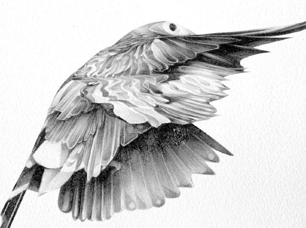 Bird 14   ( Giclee Print ) by London based artist Von  — ShopVon |  HelloVon - 3