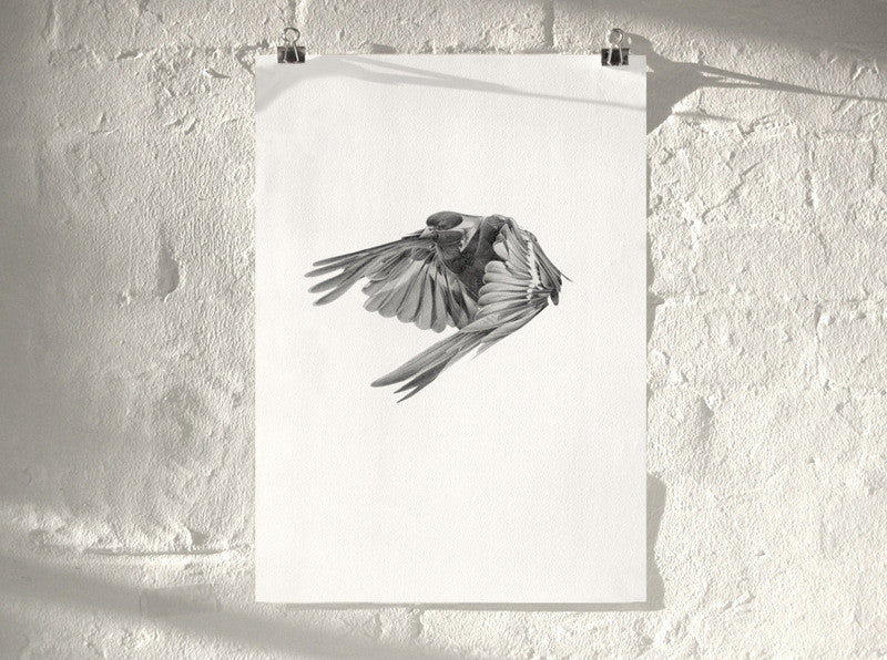 Bird 02 ( Giclee Print ) screen prints and original art by London artist Von — www.shopvon.com