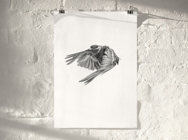 Bird 02   ( Giclee Print ) by London based artist Von  — ShopVon |  HelloVon - 1