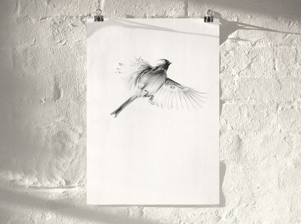 Bird 08   ( Giclee Print ) by London based artist Von  — ShopVon |  HelloVon - 1