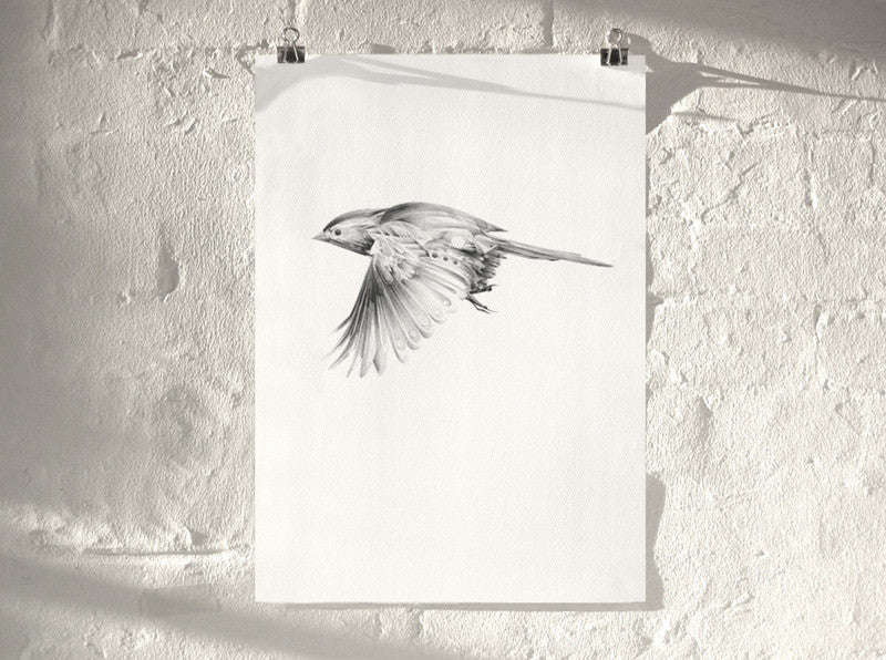 Bird 10 ( Giclee Print ) screen prints and original art by London artist Von — www.shopvon.com