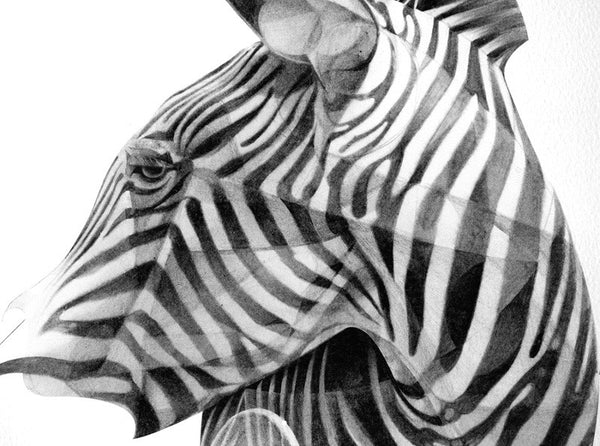 Zebra 02   (  ) by London based artist Von  — ShopVon |  HelloVon - 2