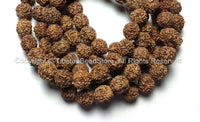 10 beads - 9mm-10mm Natural Rudraksha Seed Beads - Nepalese Rudraksha Seed Beads - Mala Making Supplies - LPB81B-10