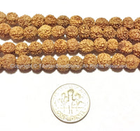 20 beads - 7mm Natural Rudraksha Seed Beads - 7mm Nepalese Tibetan Rudraksha Seed Beads Mala Making Supplies - TibetanBeadStore - LPB65-20