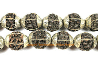 10 BEADS Natural Rudraksh Tibetan Beads with Tibetan Silver Caps - Ethnic Beads - Rudraksha Rudraksh Hindu Meditation Yoga - B3400-10