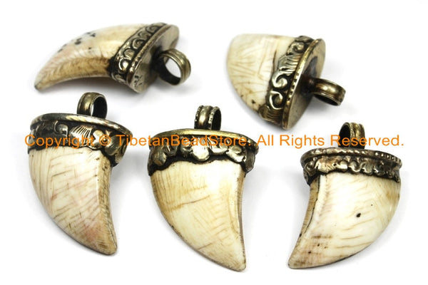 Tibetan Solid Naga Conch Shell Claw Pendant with Handcarved Tibetan Silver Metal Cap- Boho Ethnic Tribal Horn Tusk Tooth Amulet- WM6104