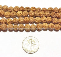 10 beads 7mm Natural Rudraksha Seed Beads - 7mm Nepalese Tibetan Rudraksha Seed Beads Mala Making Supplies - TibetanBeadStore - LPB65-10