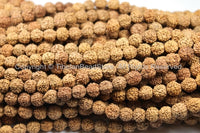 10 BEADS 9mm Natural Rudraksha Seed Beads - 9mm Size Nepalese Tibetan Rudraksha Beads Mala Making Supplies by TibetanBeadStore- LPB67-10