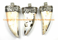 LARGE Tibetan Solid Naga Conch Shell Horn Pendant with Handcarved Repousse Metal Cap- Boho Ethnic Tribal Horn Tusk Tooth Amulet - WM6125C