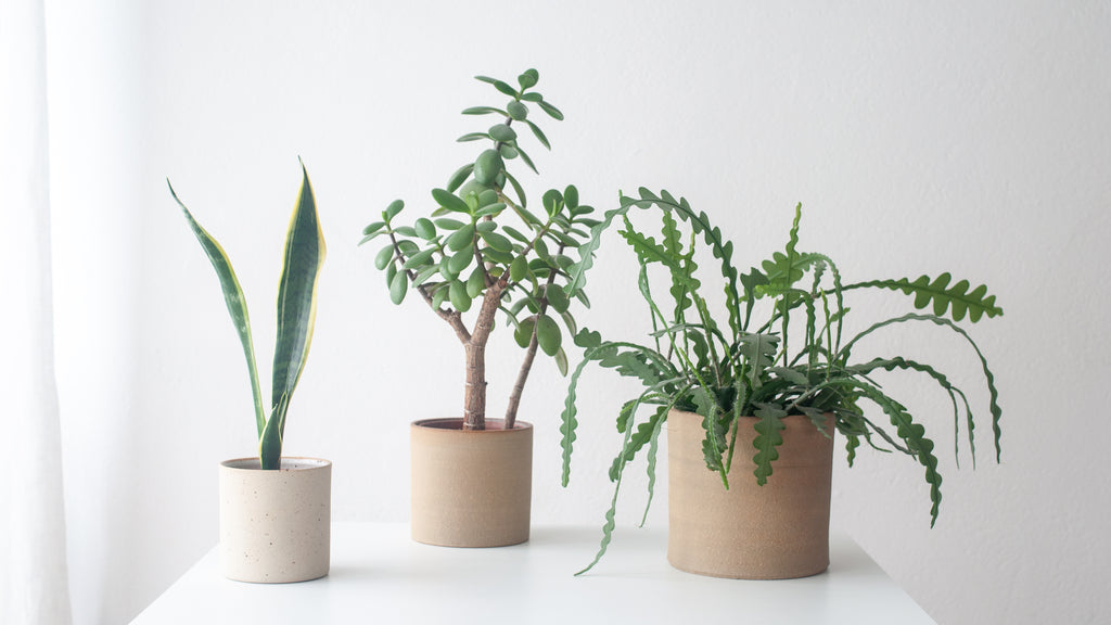 Dor and Tan Planter collection