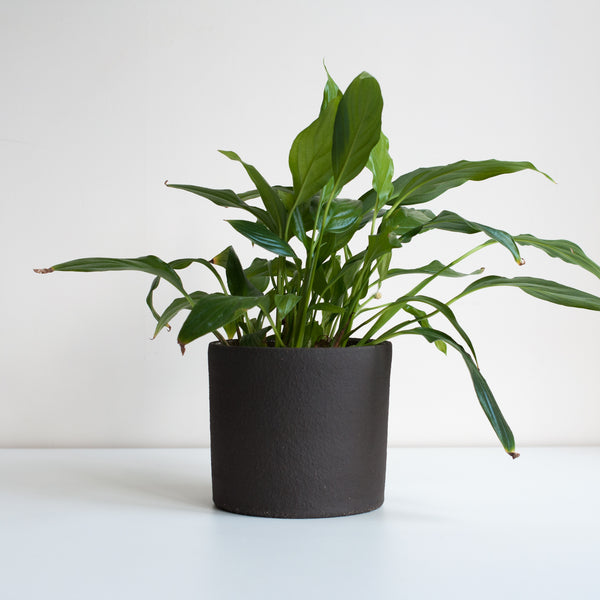 Medium Planter - Coal, Planter - DOR & TAN | Contemporary Handmade Tableware