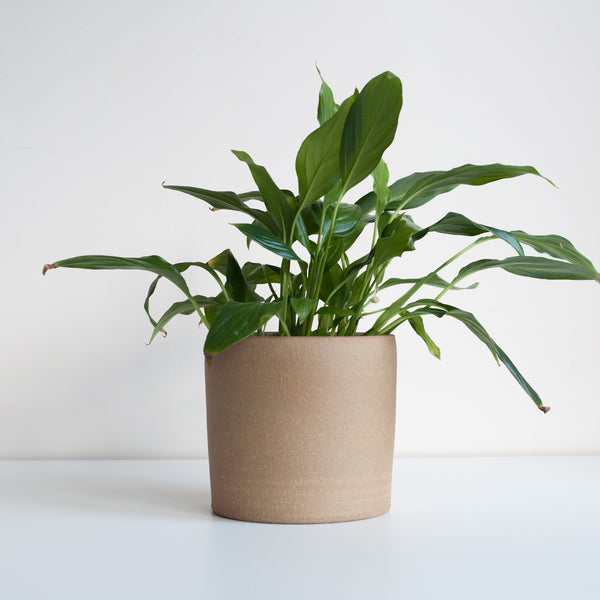 Medium Planter - Oat, Planter - DOR & TAN | Contemporary Handmade Tableware