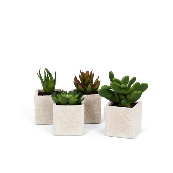 MOJAVE – Succulents in Pot Assorted