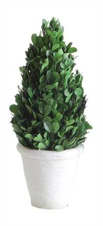 Medium Preserved Boxwood Cone Shaped Topiary In Clay Pot