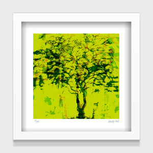 Wanaka Tree Lime - 25cm - White/Black Framed or Unframed