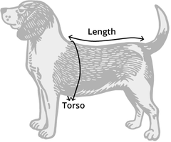 Dog measuring image