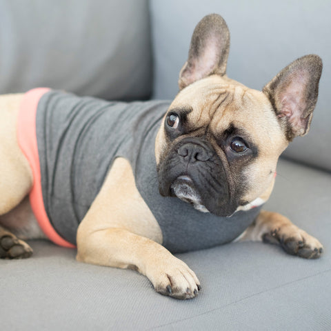 Dark Grey Dog Jumper (3 colours)