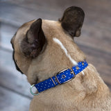 Red or Blue Polka Dot Dog Collar
