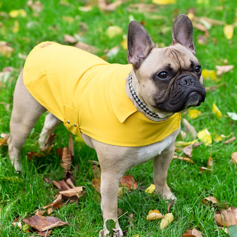 Dog Raincoat (3 colours)