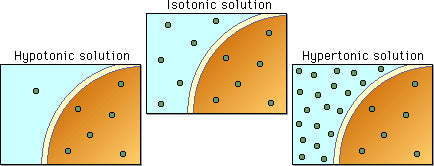 Diagram to explain the movement of hypertonic, isotonic and hypotonic fluids across cell walls