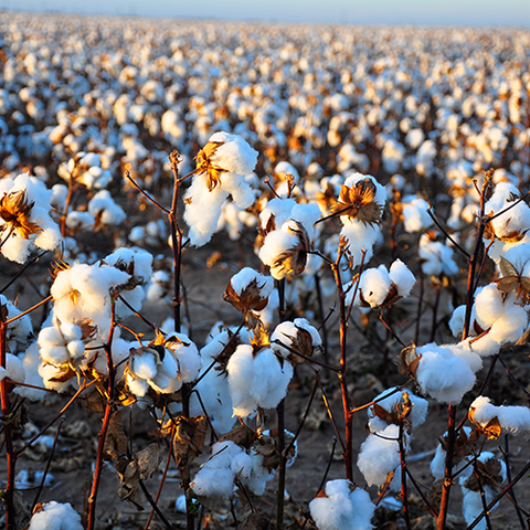 Urban Gilt The Gilty Report The True Cost Of Fashion Cotton Field