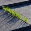 sustainability - grass growing through concrete