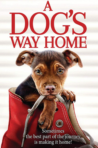 A Dog's Way Home (2019) (HNR)