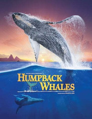 Humpback Whales (2015) (HNR) - Anthology Ottawa