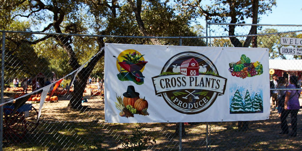 Cross Plants' Seeds Of Success