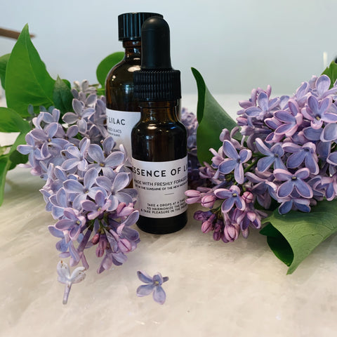 The Little Lilac Bundle: Essence of Lilac Drops & Lilac Sweet Elixir