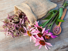 Echinacea Fights the Flu