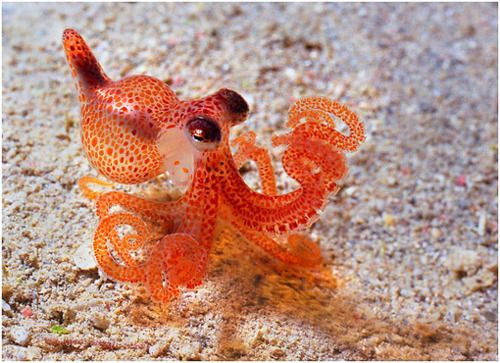 How To Spot An Octopus With Your Snorkl