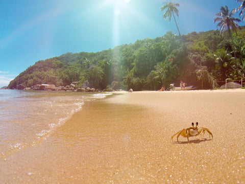 Snorkeling in Brazil with a Snorkl